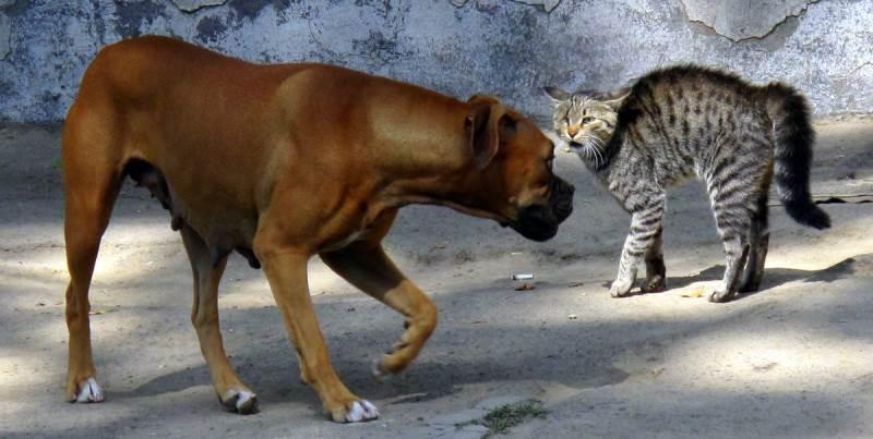 Как отучить собаку или щенка гоняться за кошками – 10 простых советов