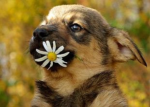 Лечение собак народными средствами