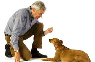 Дрессировка псов