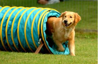 Правильно дрессировать собак