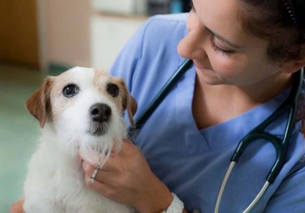 Вазелиновое масло при запорах у собак читайте статью