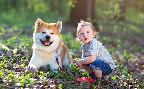 Мальчик с акитой в парке