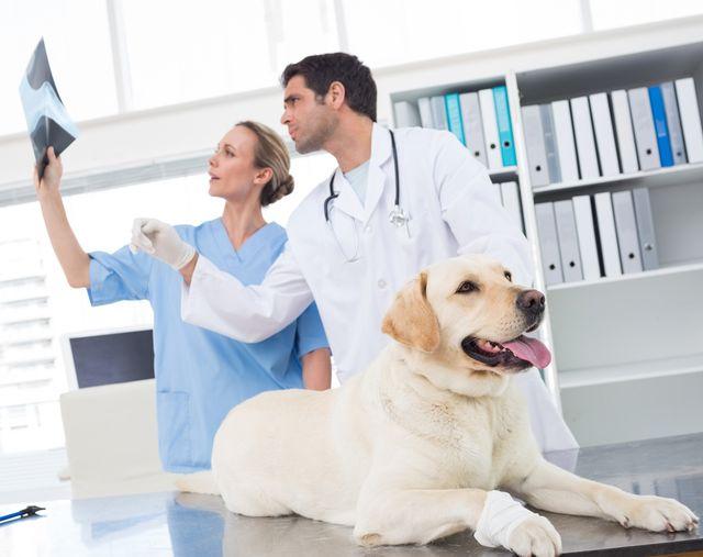 Артроз у собак