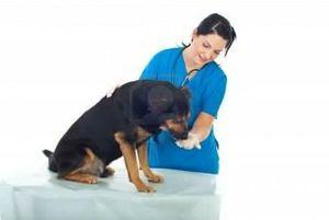 Виды обезболивающих препаратов для собак