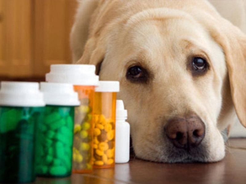 Помощь собаке при глистах
