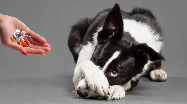 инструкция применения Диклофенакп для собаки