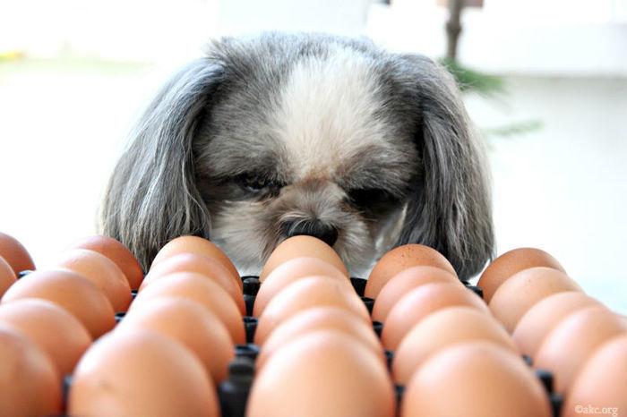 Собака смотрит на яйца