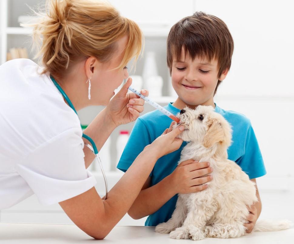 Правила дегельминтизации собак