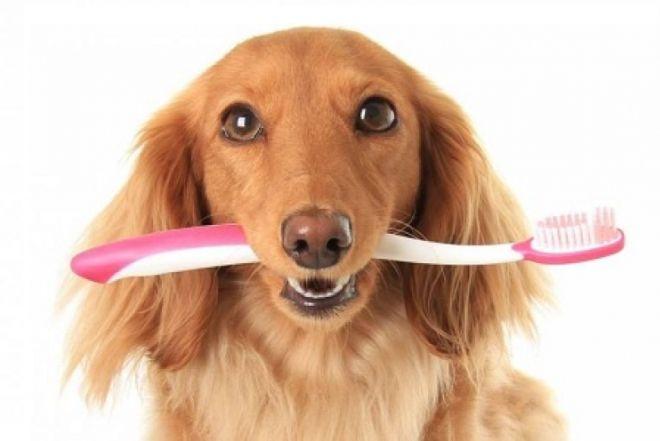 гель от зубного камня для собак