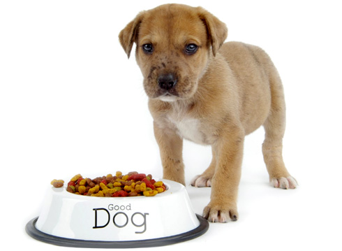 Выбор корма для собаки