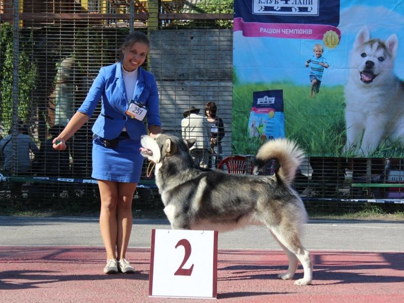 Рост и размеры собаки маламут