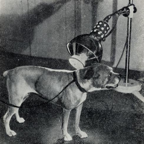 лечение пневмонии у собаки дома