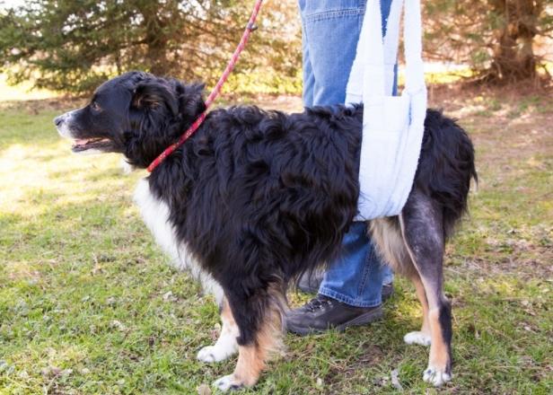 Растяжение задней лапы у собаки - симптомы