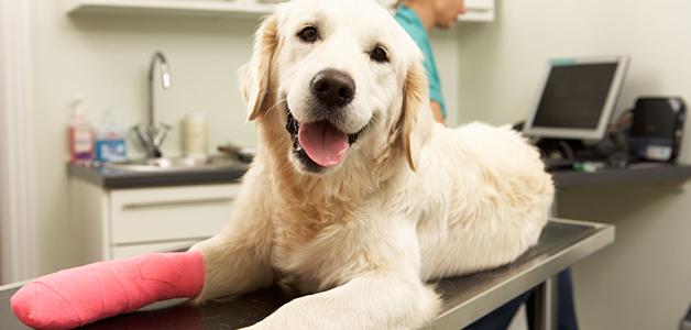 Растяжение у собаки лечение