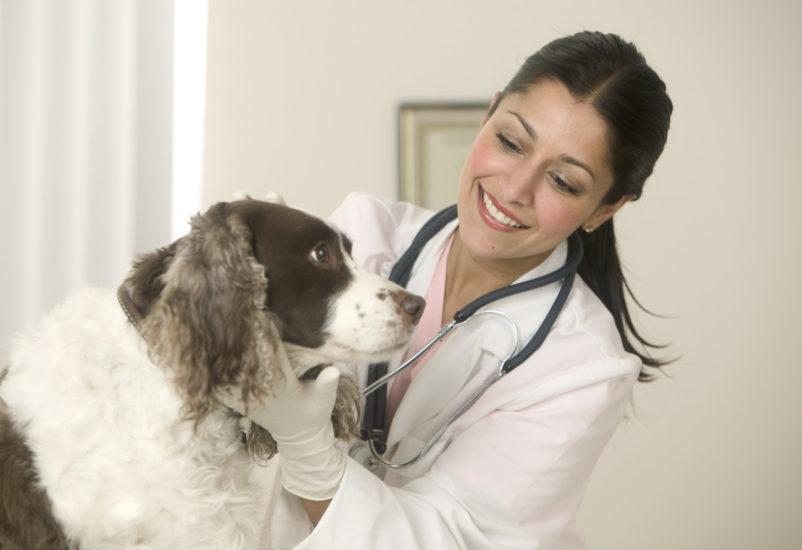 лечение язвы у собаки