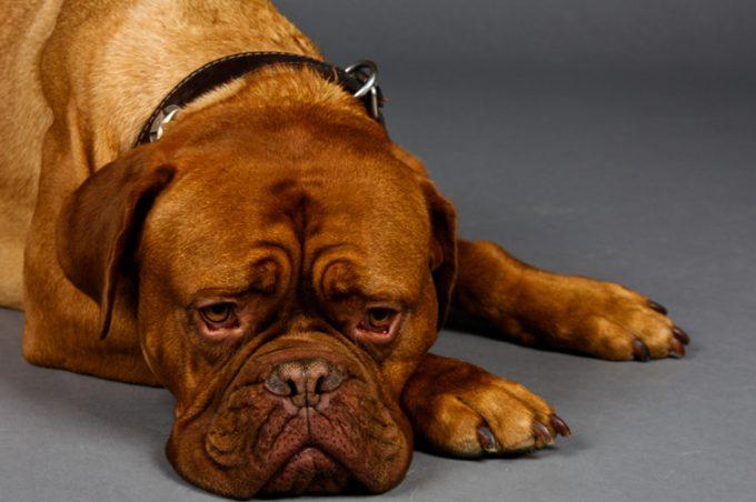 собака теряет вес при проблемах в ротовой полости