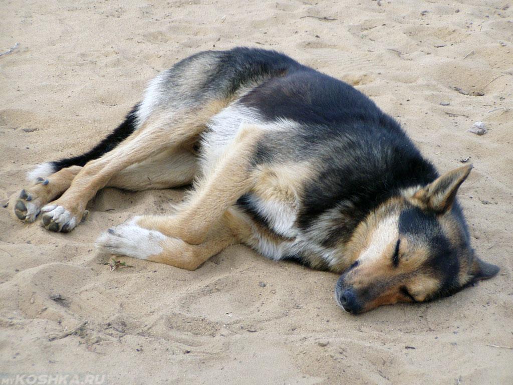 Спящая на боку собака с загнутыми лапами