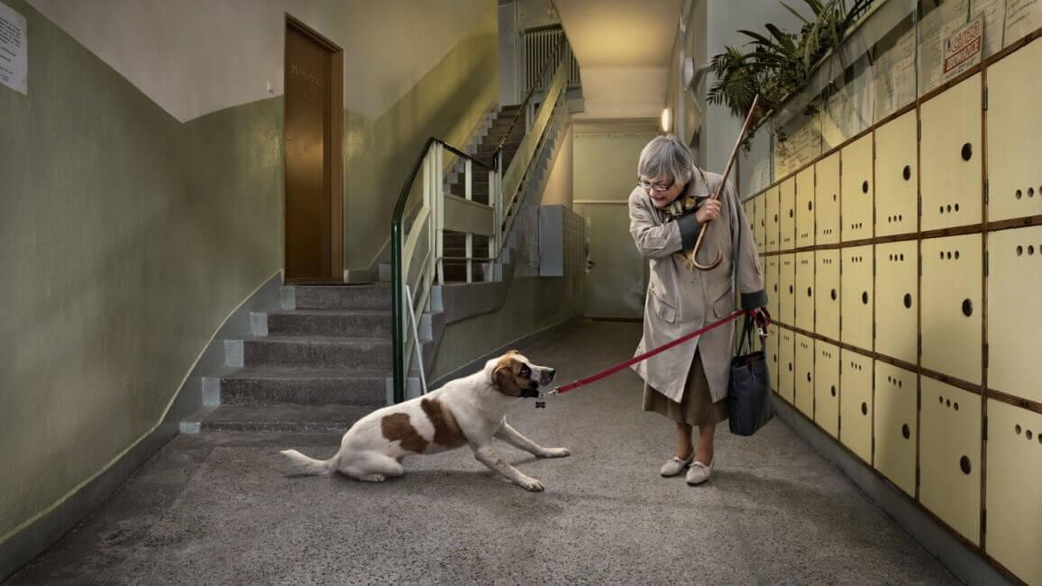 Так можно потерять доверие собаки