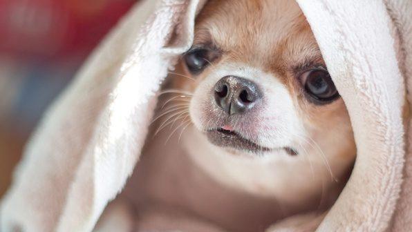 симптомы частого дыхания у собаки