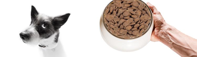 В чём может быть вред сухого корма для собак?