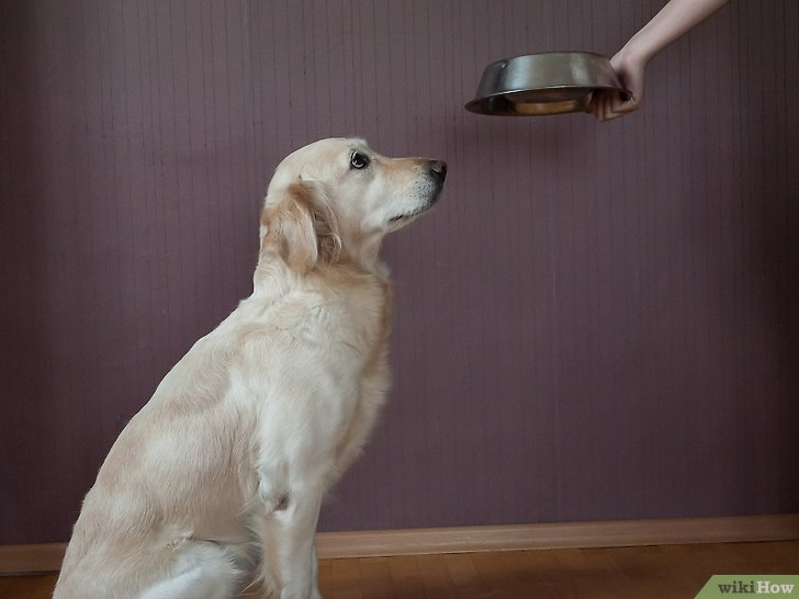 Изображение с названием Work With Dominant Dogs Step 4