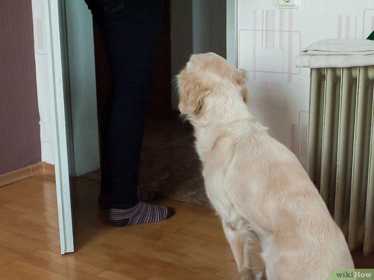 Изображение с названием Work With Dominant Dogs Step 5