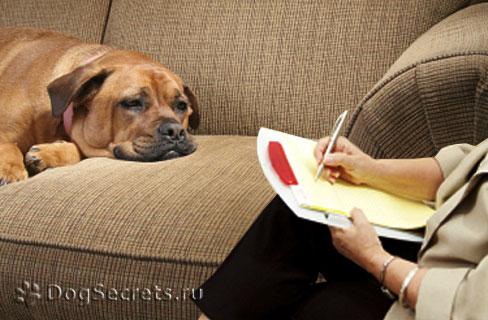 Кинолог-зоопсихолог для собак