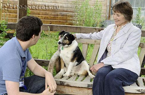 С собакой занимается зоопсихолог