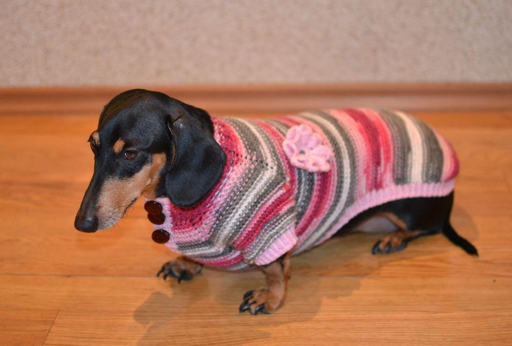 самостоятельное вязание одежды для такс
