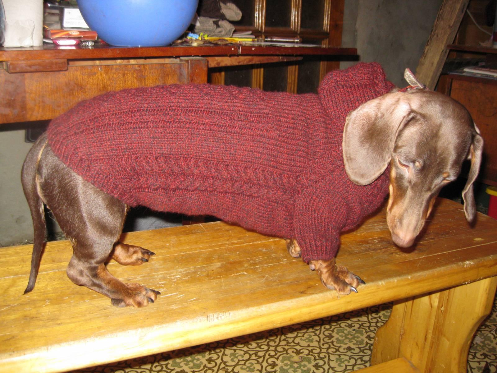 вязание свитера для таксы