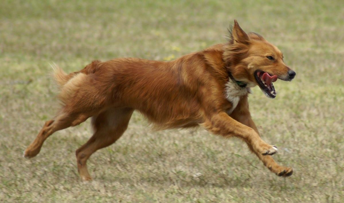 Причины икоты у собак