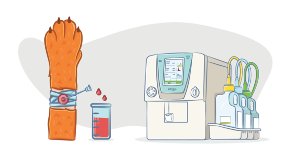 Подготовка к операции – анализ крови у кошек и собак