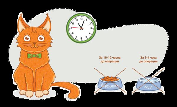 Голодная диета перед операцией для кошек и собак очень важна!