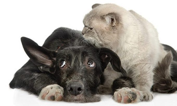 от чего появляется глухота у собак