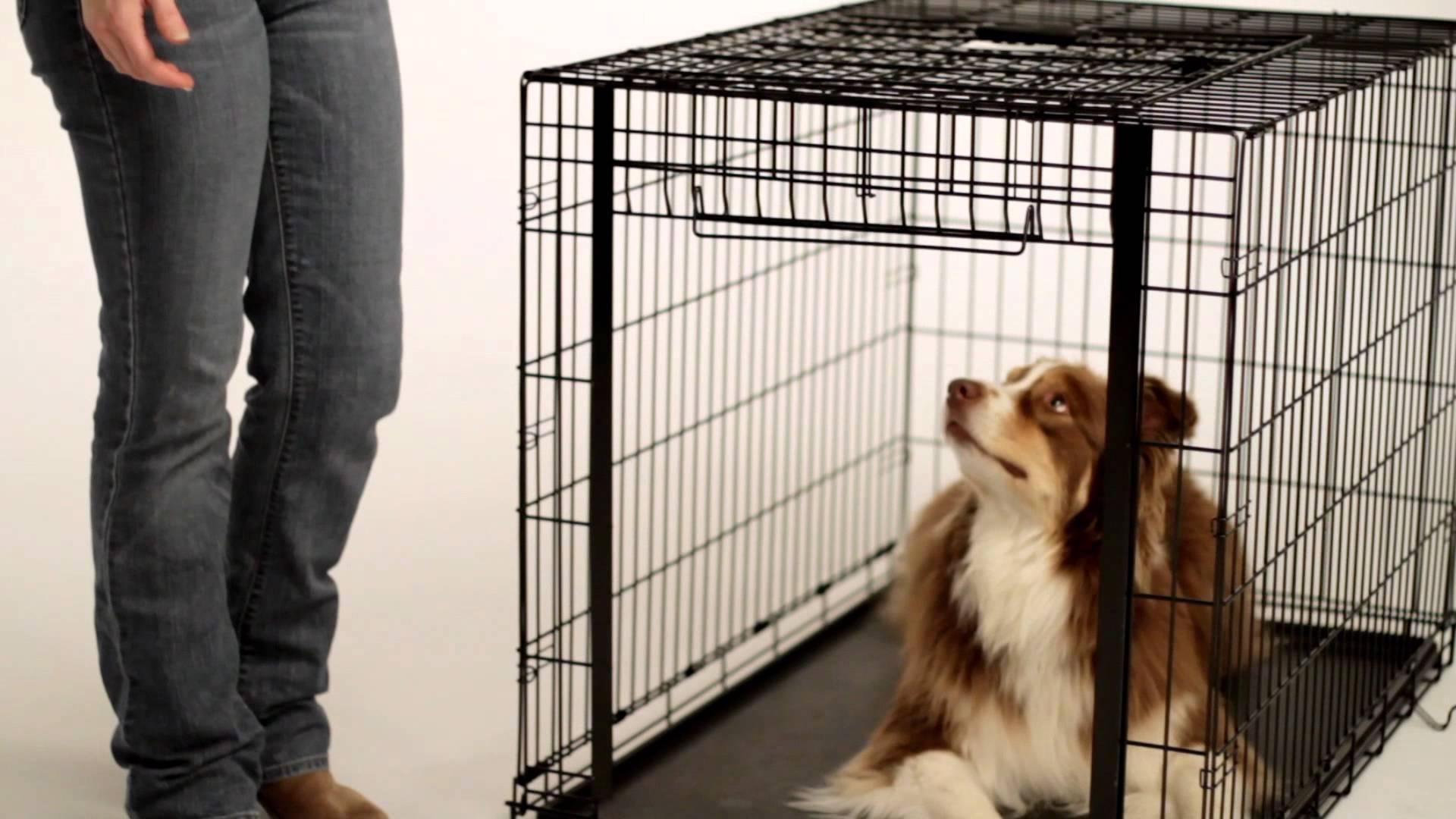 Вязка у собак хаски