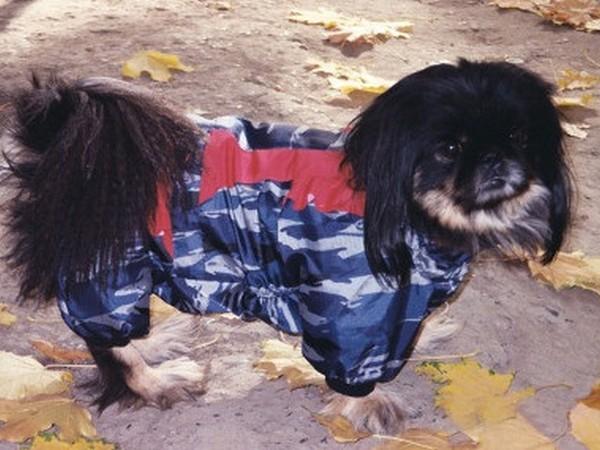 Фотогалерея одежда для пекинесов фото - 2