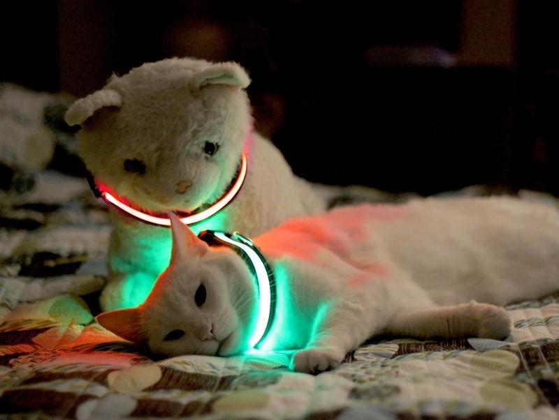 Лучшие светящиеся ошейники для кошек