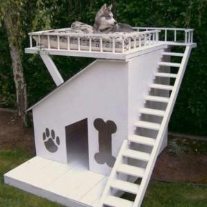 Необычная собачья будка