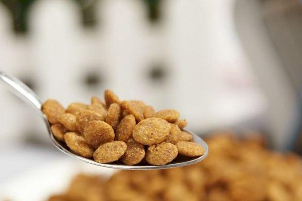 Собак рекомендуется кормить качественными кормами