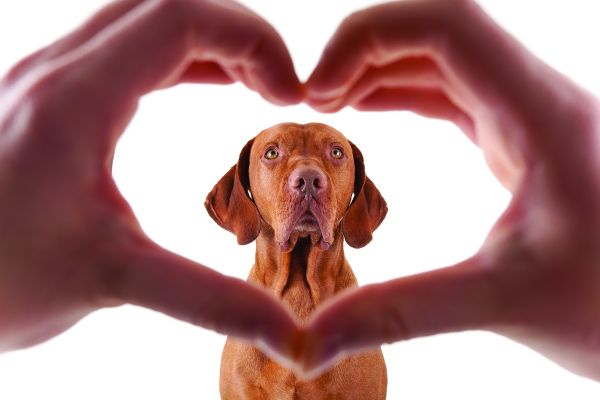 виды пороков сердца у собаки