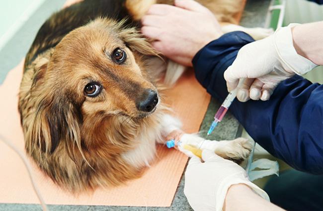 лечение инсульта у собак
