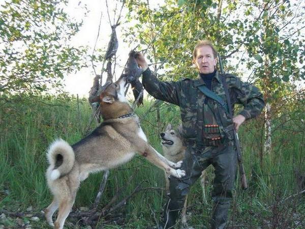 Фотогалерея охота с лайкой фото - 9