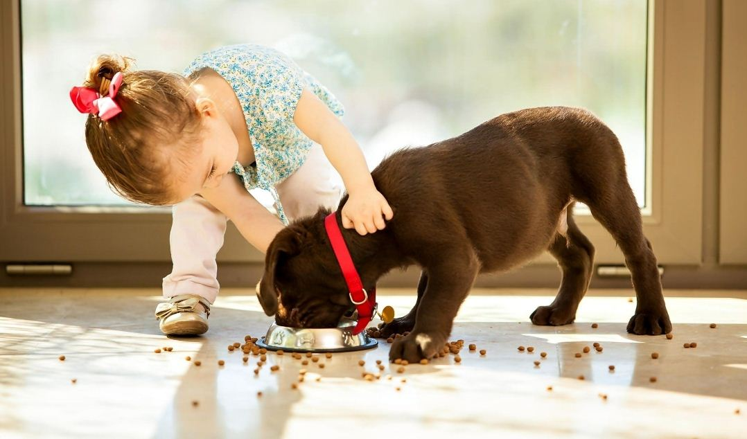 Выбираем лучший корм для щенка