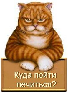 где лечить кошку