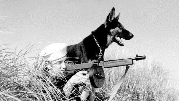 Как собаки США отправлялись на войну