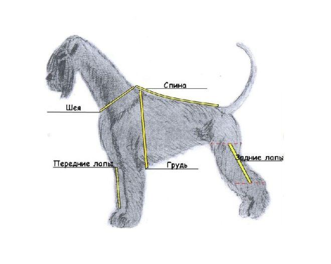 как измерить собаку для одежды