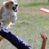 Почему у собаки учащенное дыхание?